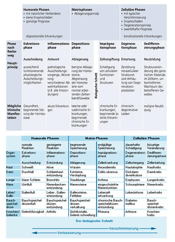 Bindegewebsmatrix - weshalb so wichtig und was versteht man darunter?